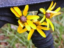 Free Bench & Black Eye Susan Royalty Free Stock Photos - 8798