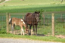 Mare And Colt Behind Fence Stock Photos