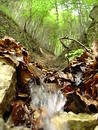 Free Small Waterfall Through Leaves Royalty Free Stock Photo - 16145