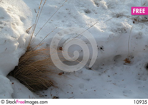 Free Winter Grasses Royalty Free Stock Photo - 10935