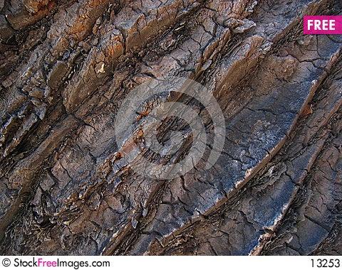 Free Palm  Texture Stock Photos - 13253
