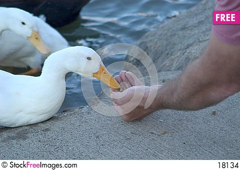 Free Hand Feeding Stock Images - 18134