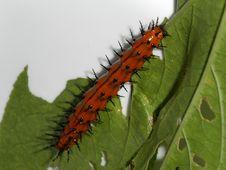 Free Caterpillar & Leaf Stock Photos - 10493
