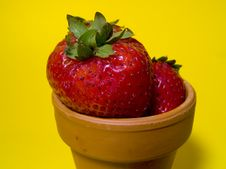 Free Strawberries In Pot Royalty Free Stock Image - 13146