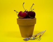 Free Potted Cherries Stock Photo - 13360