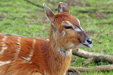 Free Deer Royalty Free Stock Images - 15569