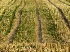 Free Stubble Field 1 Stock Images - 15654
