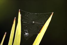 Free Spider Web Royalty Free Stock Photography - 15937