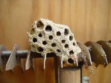 Hornet Nest Royalty Free Stock Photos
