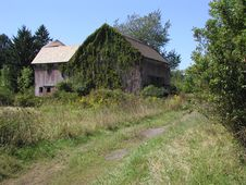 Free Ivy Covered Barn Royalty Free Stock Photos - 16648
