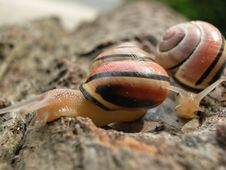 Free Following Mollusk Stock Photos - 17013