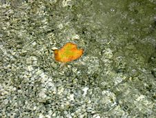 Free Leaf In Wirlpool Royalty Free Stock Photography - 17117