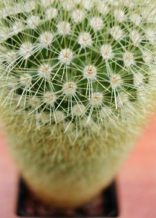 Free Top Down Of A Cactus Stock Image - 17961