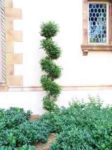 Free Screw Tree Stock Photo - 19020