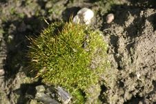 Free Moss Stock Images - 100104