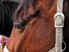 Free Horse S Head Royalty Free Stock Image - 101056