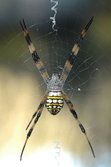 Free Spider On Webb Stock Photo - 101790