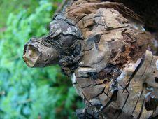 Free Log Royalty Free Stock Image - 102326