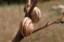 Free Snails And A Friend Royalty Free Stock Photos - 102378