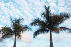 Free Tall Palms Stock Photos - 102593