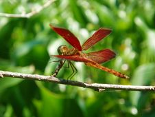 Free Dragonfly Royalty Free Stock Image - 102766