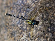 Free Dragonfly Royalty Free Stock Photo - 102845