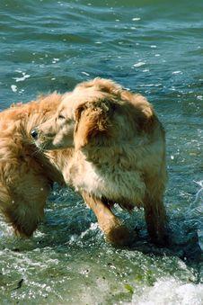 Free Dog Turning Around On Beach Stock Image - 103161