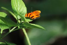 Free Perched Orange Butterfly Stock Images - 104354