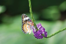 Free Butterfly Feeding Royalty Free Stock Image - 104356