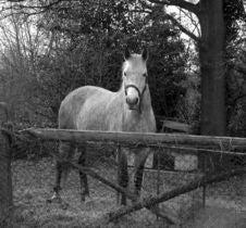 Free Horse Royalty Free Stock Photos - 105328