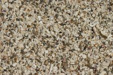 Free Beach Shells Texture Stock Photo - 105840