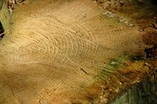 Free Close-up Of A Felled Tree. Stock Photos - 106993