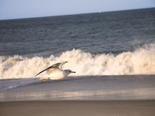 Free Seagull And Surf Stock Images - 107604