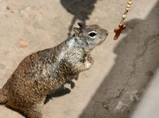 Free Praying Squirrel Stock Images - 107994