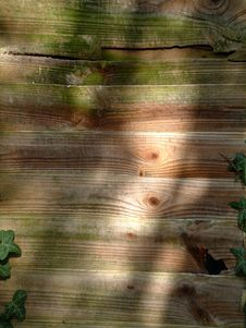 Free Ivy And Wood 2 Stock Photography - 108722