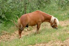 Free Horse Royalty Free Stock Photos - 109138