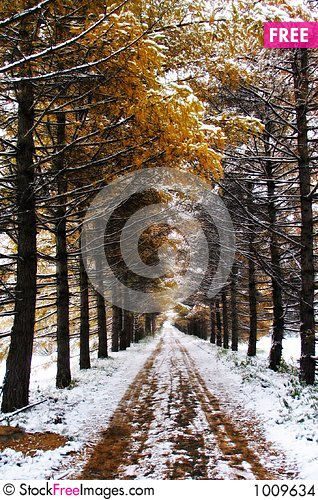 Free Golden Winter Stock Images - 1009634