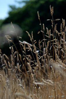Free Wild Grass Stock Photo - 1000330