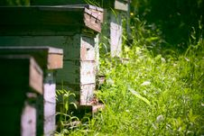 Free Hives In The Garden Royalty Free Stock Image - 1000456