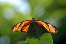Free Butterfly Landing On A Leaf Royalty Free Stock Photo - 1000885