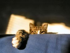 Free Cat Watching Stock Images - 1001024