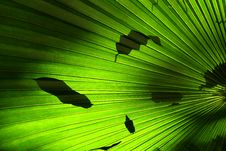 Free Palm Leaf Royalty Free Stock Photos - 1001148