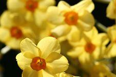 Free Flower Closeup Royalty Free Stock Image - 1002016