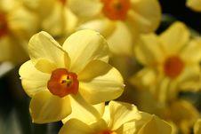 Flower Closeup Royalty Free Stock Photo