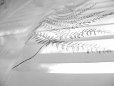Free Lace Abstract Pattern 8 Stock Image - 1003311