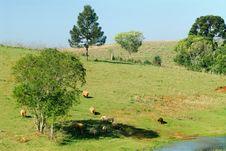 Free Sheep Stock Image - 1003661