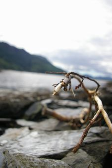 Free Branch On The Beach Stock Image - 1004471