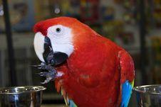 Free Scarlet Macaw Stock Photos - 1004883