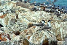 Free Birds On Rocks Stock Photo - 1005210