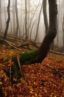Free Foggy Forest In Giant Mountains Stock Photography - 1005632